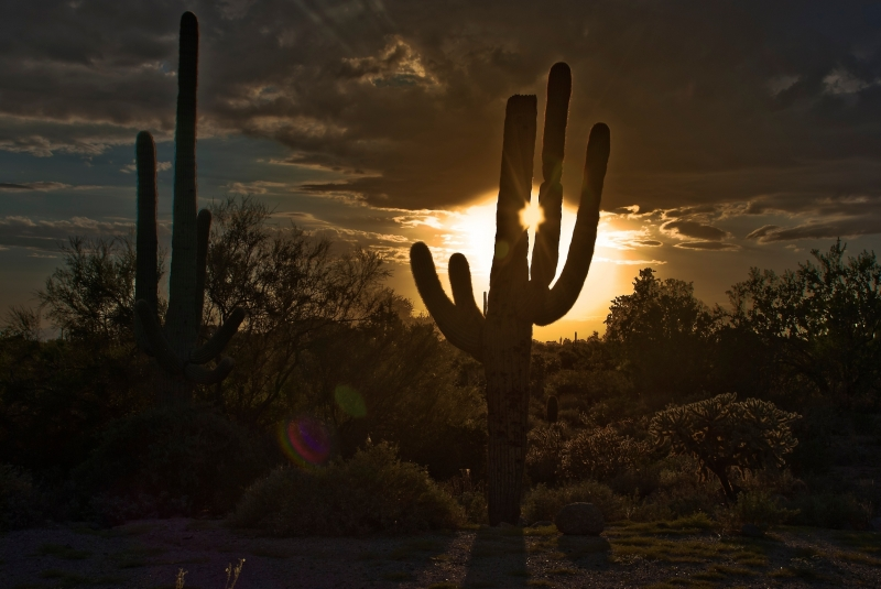 Sunset Mohave Desert
