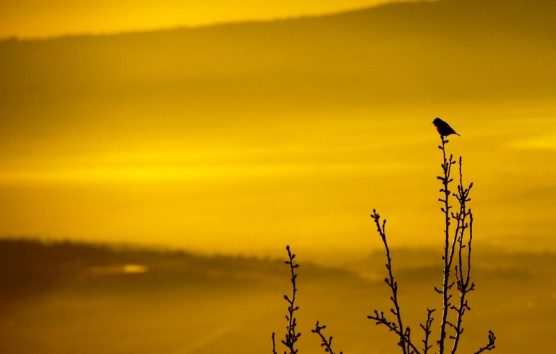 Bird At Sunrise