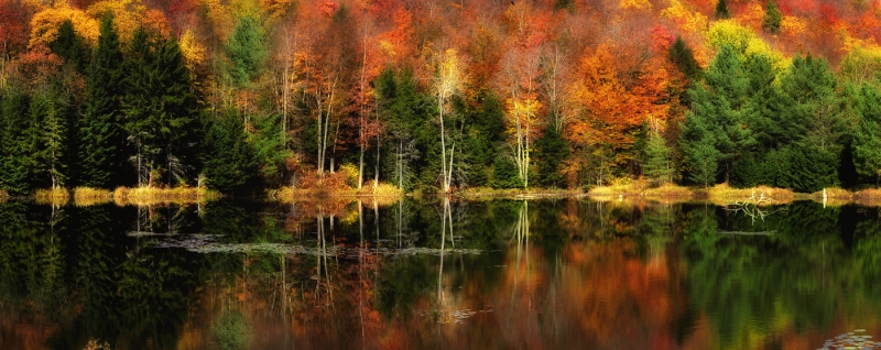 Fall Reflection In Pond