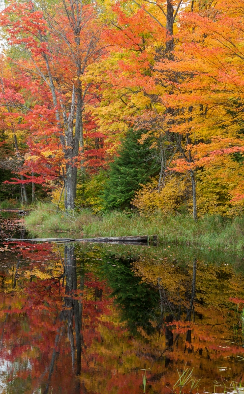 Northwoods Pond In Autumn