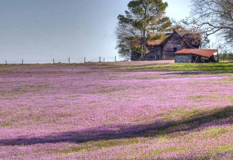 Wildflower Field In The Country