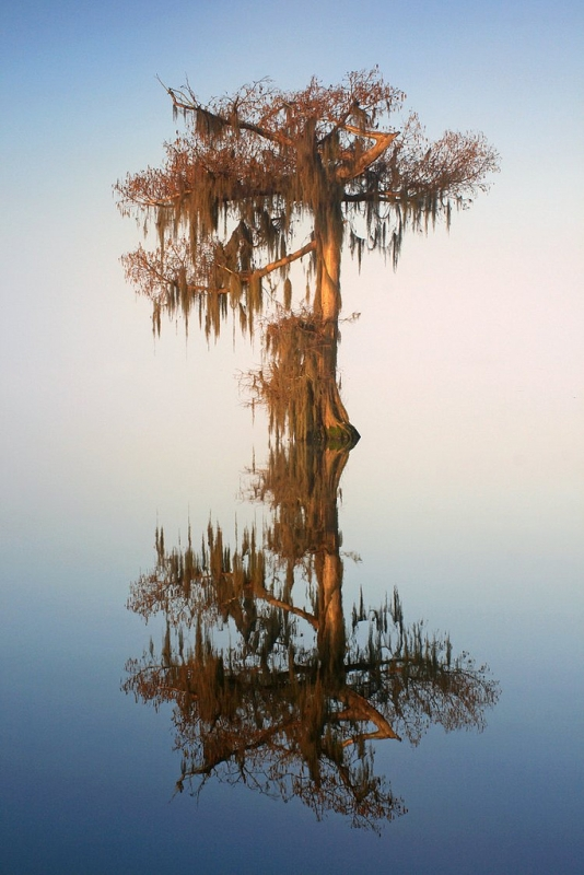 Floating Cypress