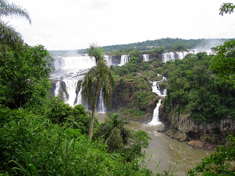 Iguassu Falls And Cococut Tree