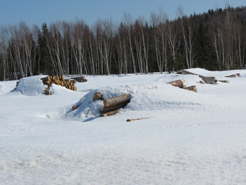 Lumber In The Saw Mill Under All The Snow