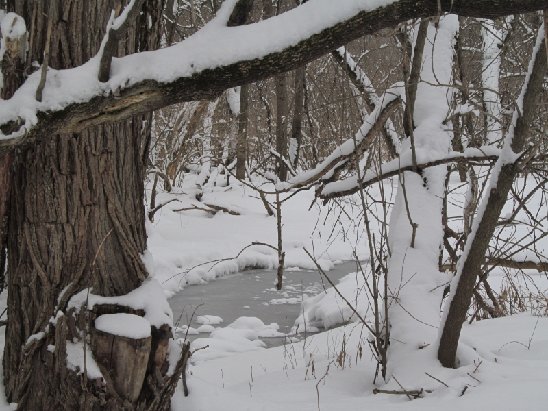 Ice-covered Creek