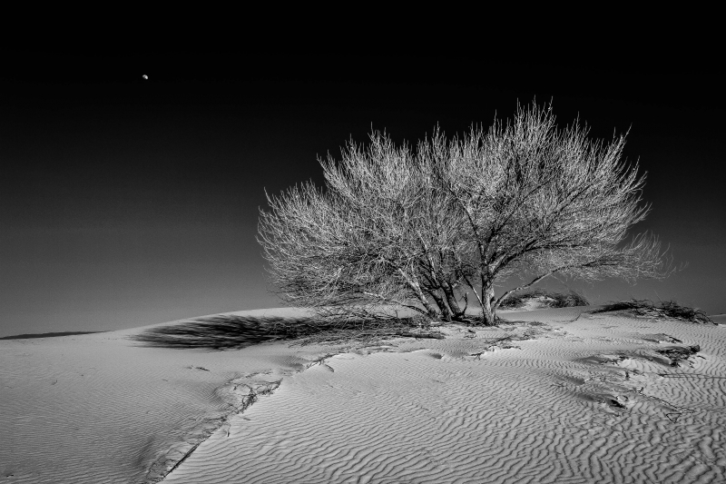 Black And White Sands