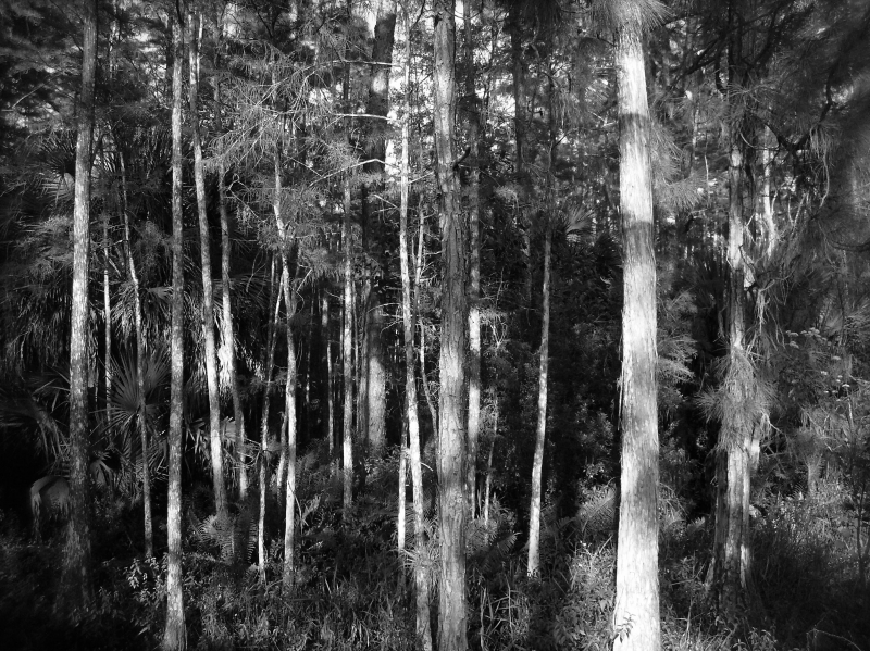 Trees In Black And White7