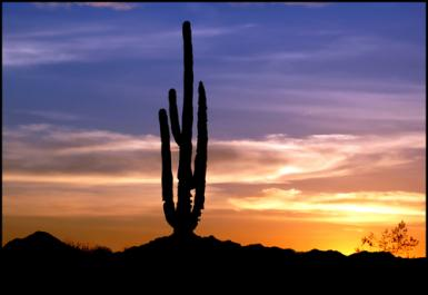 Tucson- Saguaro Cactus At Sunset