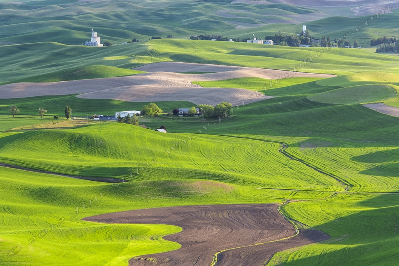 The Rolling Hills Of The Palouse