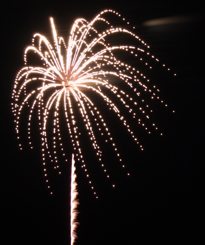 Firework Forms Palm Tree