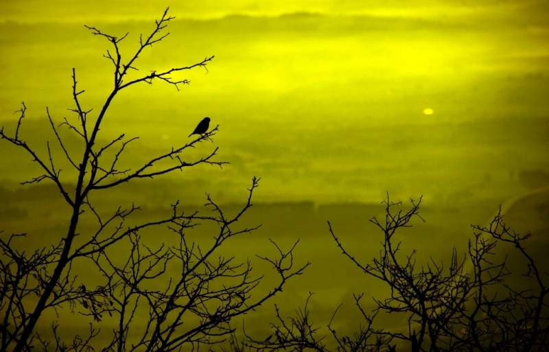 Bird At Sunrise Ll