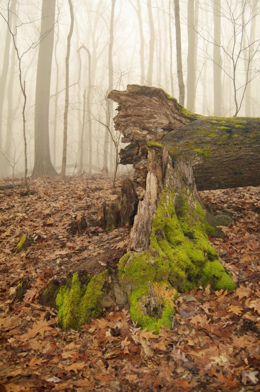 Moss In The Fog
