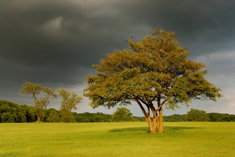 Storm Over Lone Oak Tree