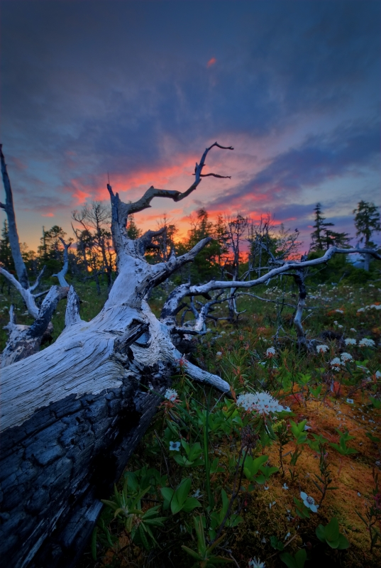 Fallen Tree At Sunset