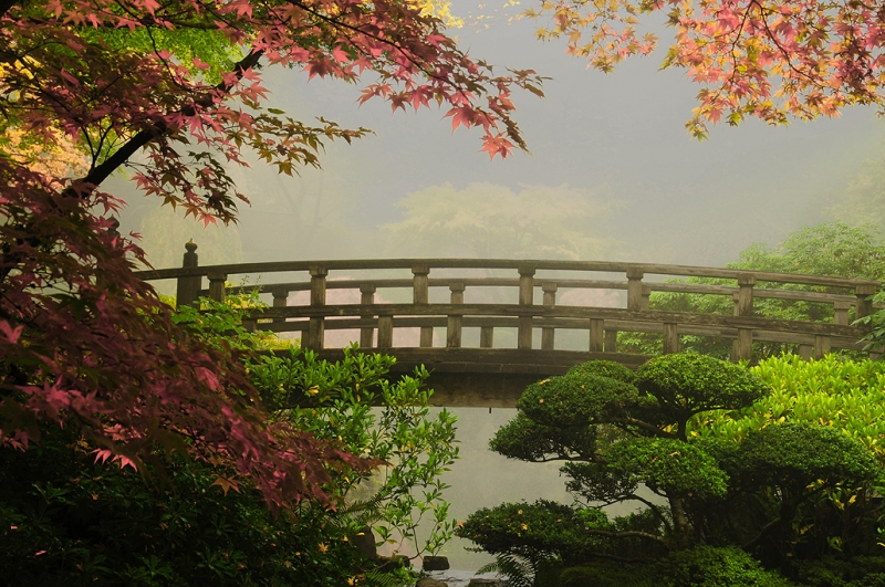 Autumn Fog At The Japanese Garden