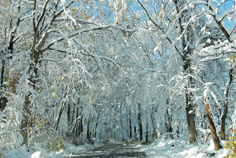 Snow Packed Trees On Roadside