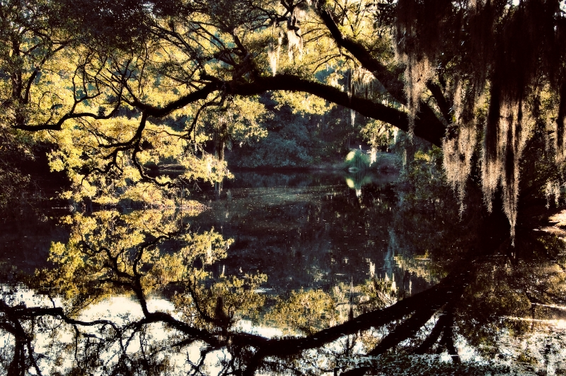 Lowcountry Reflections, Charleston, Sc