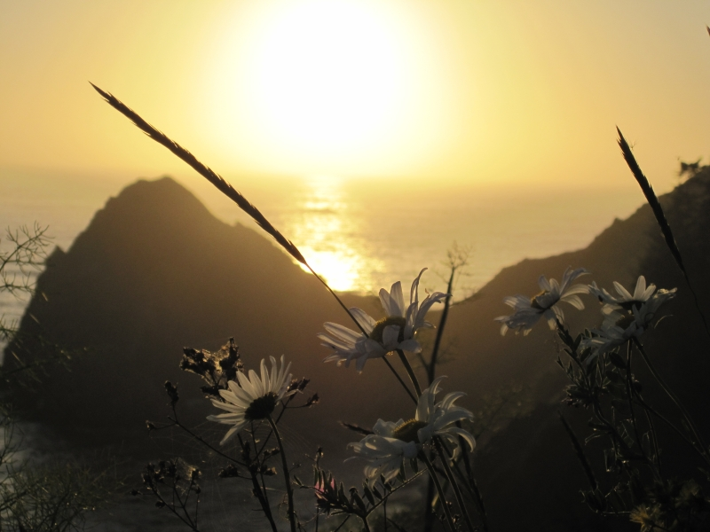 A Daisy Sunset On The Oregon Coast