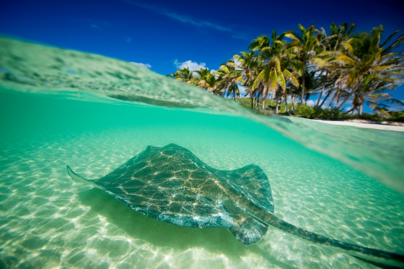 Mexico Stingray