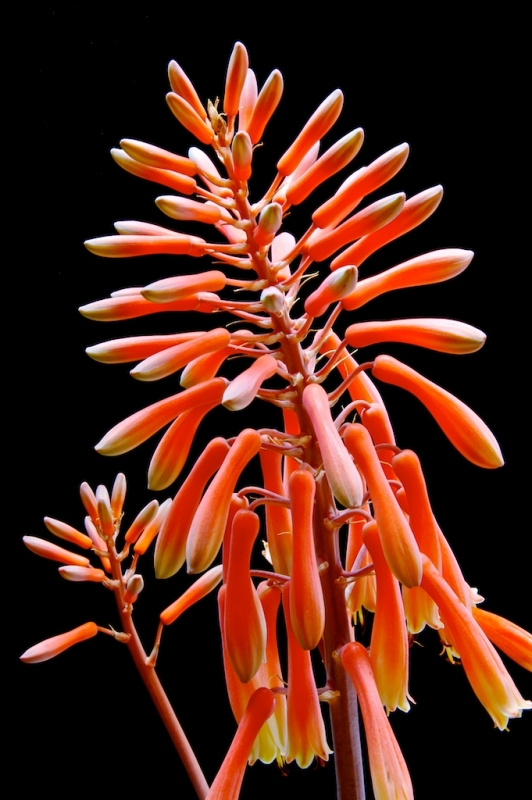 Aloe, 'Ow Are You?