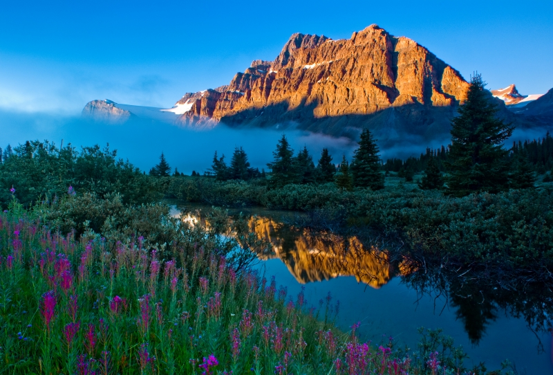 Crowfoot Mountain Reflection