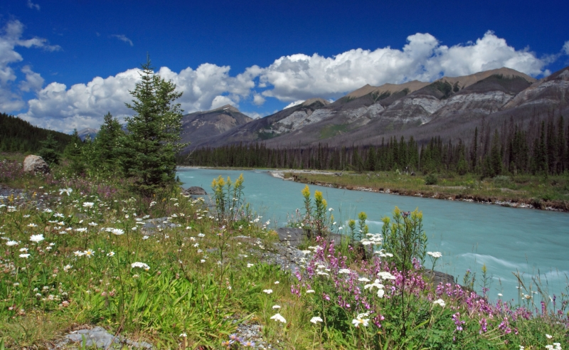 Wildflowers Along The Kootenay River