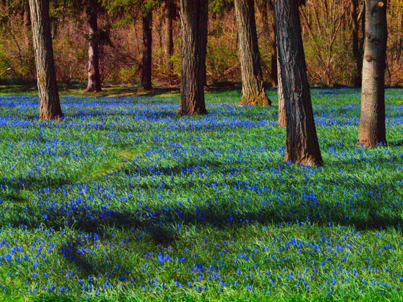 Blue Bell Forest