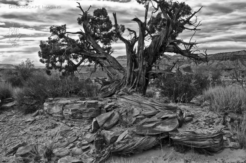 The Old Rugged Tree