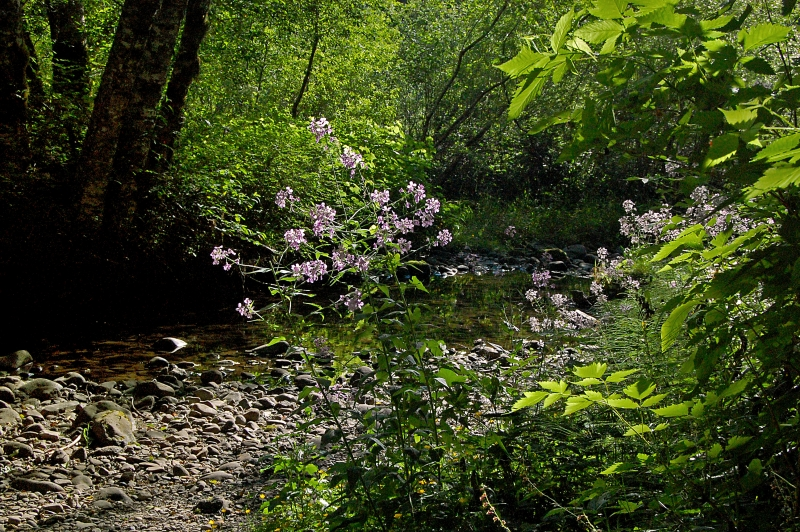 Wildflowers By Stream In Woods