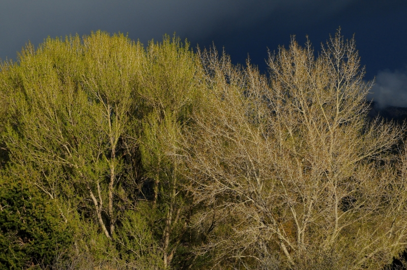 Cottonwood Storm