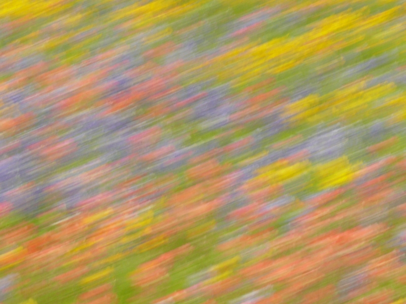 Drive-by Wildflowers