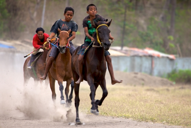 Pacuan Kuba – The Horse Races
