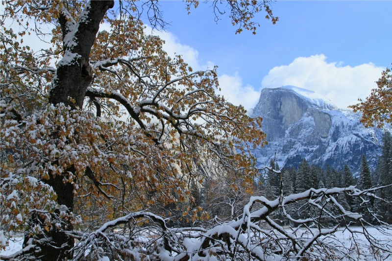Half Dome From Meadow