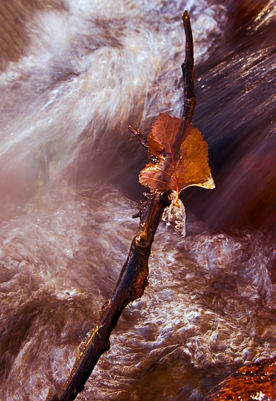 Frozen Leaf, Lone Pine Creek, California