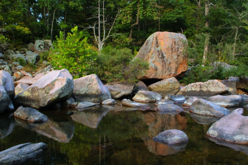Castor River Bank And Reflections