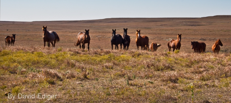 Horses On The Prairie