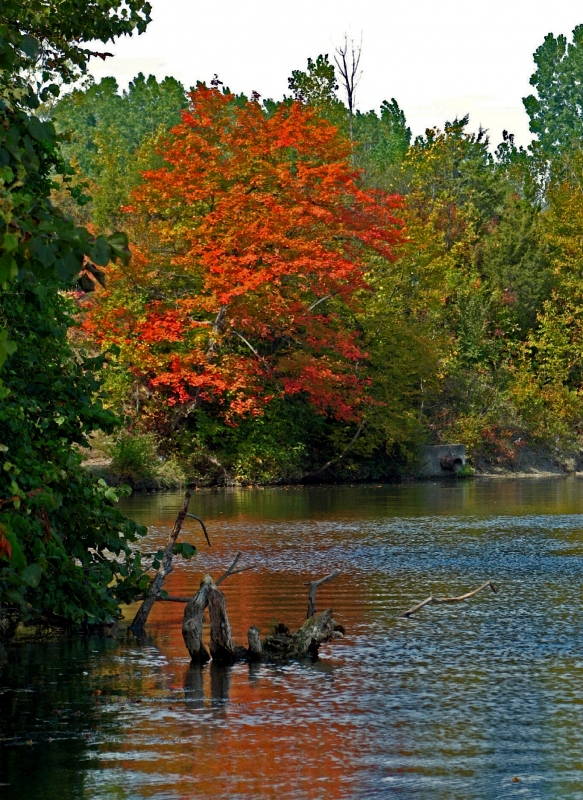 Autumn In The River