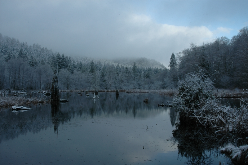 Mcclane Creek Beaver Pond Winter