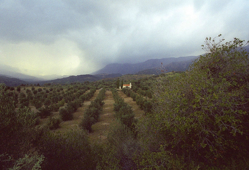 Churhc In The Olives