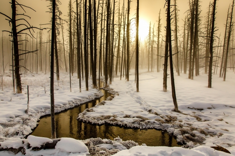 A Yellowstone Sunrise