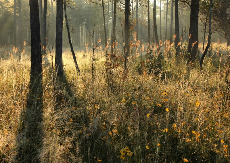 Sunrise At The Flatwoods