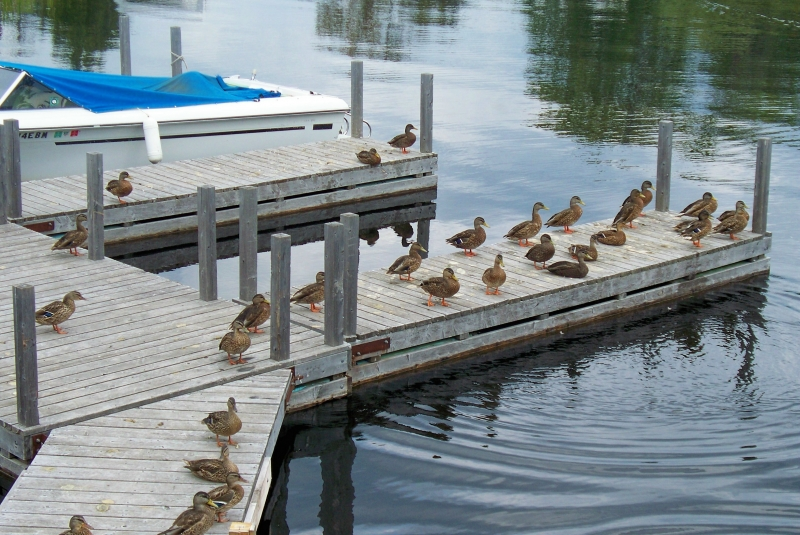 The Duck Dock