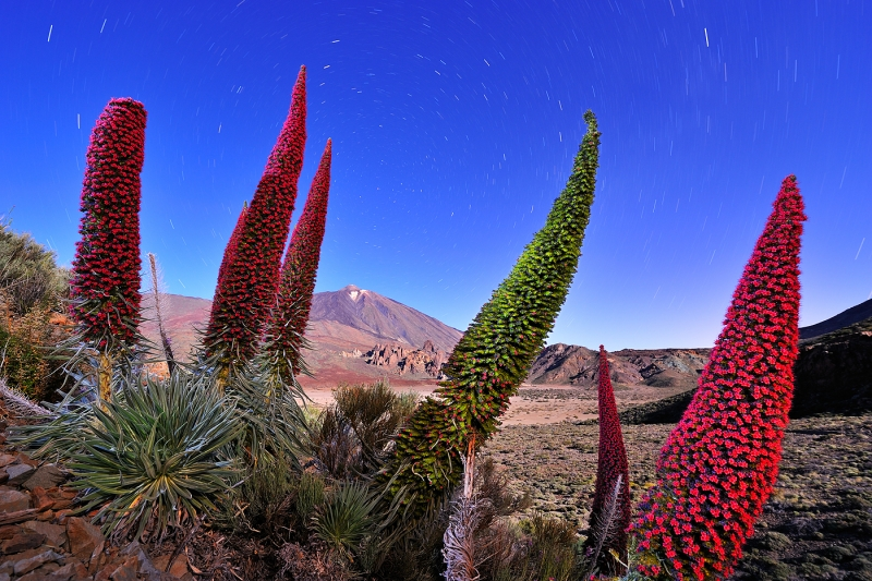 The Flowers Of The Volcano
