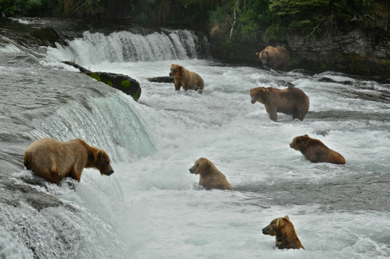 Brooks Falls – Katmai National Park