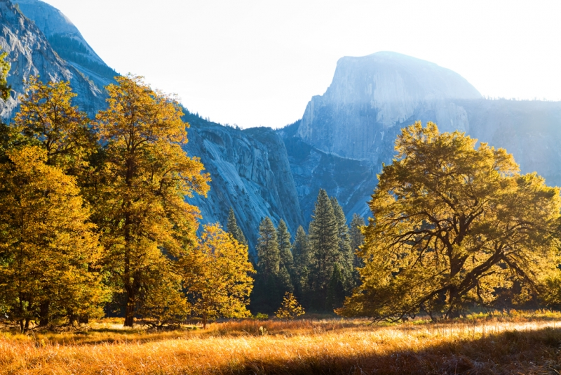 Fall Morning, Yosemite