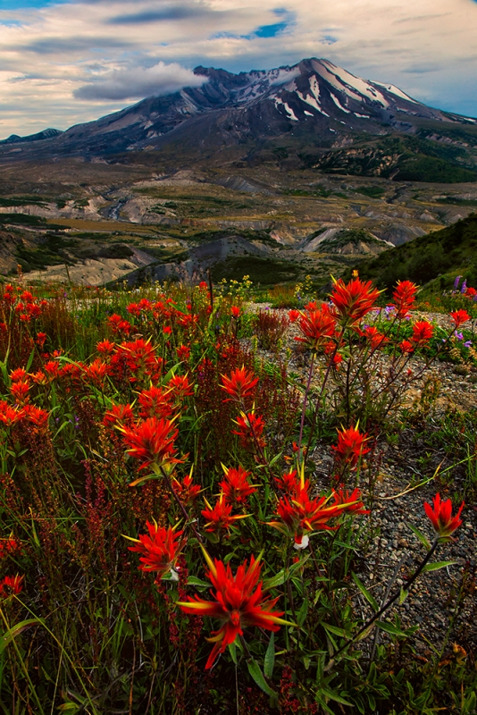 Spring Paintbrush, Mt. St. Helens