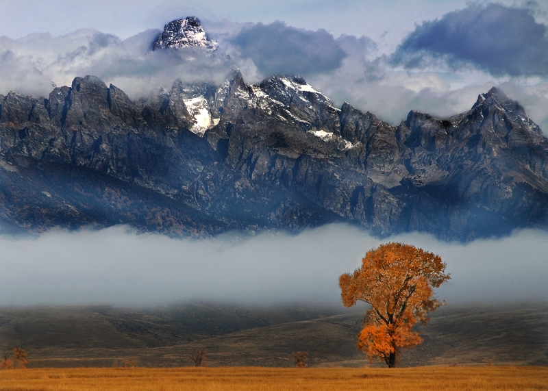 Grand Teton And Tree