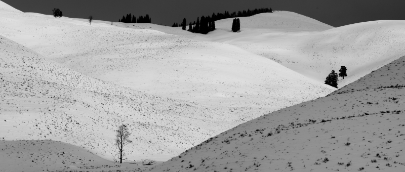Lone Tree, Lamar Valley Winter