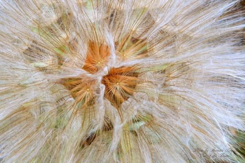 Inside A Seed Tuft~