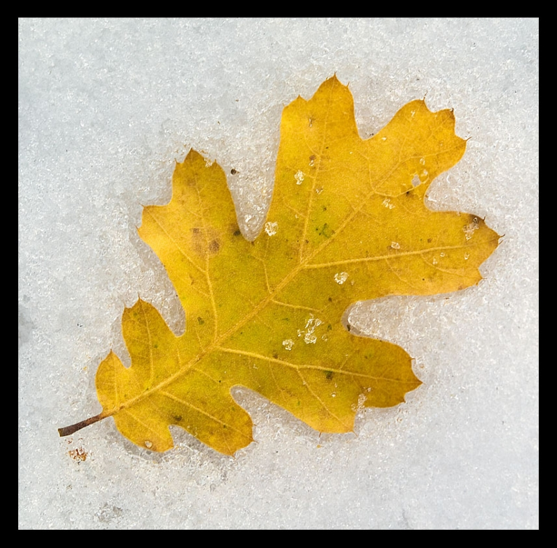Fall And Winter Collide